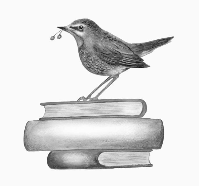ワンダーフォーゲル 渡り鳥通信 挿絵